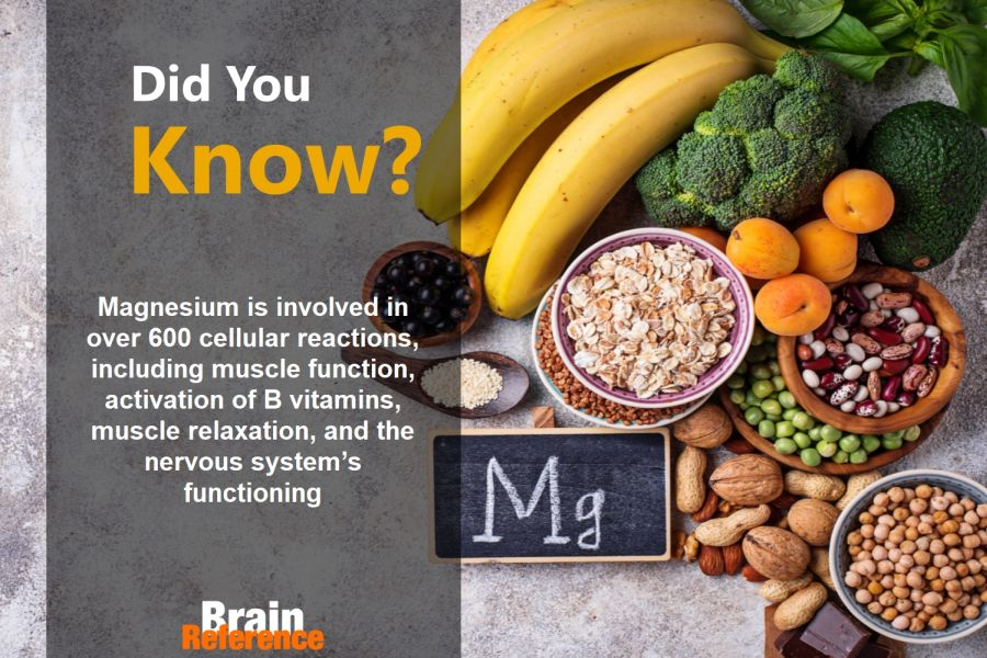 Attentive-Child-Source-Naturals-Magnesium-Facts